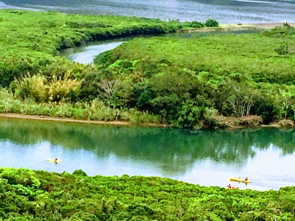 観光客がカヌーを楽しむマングローブ原生林