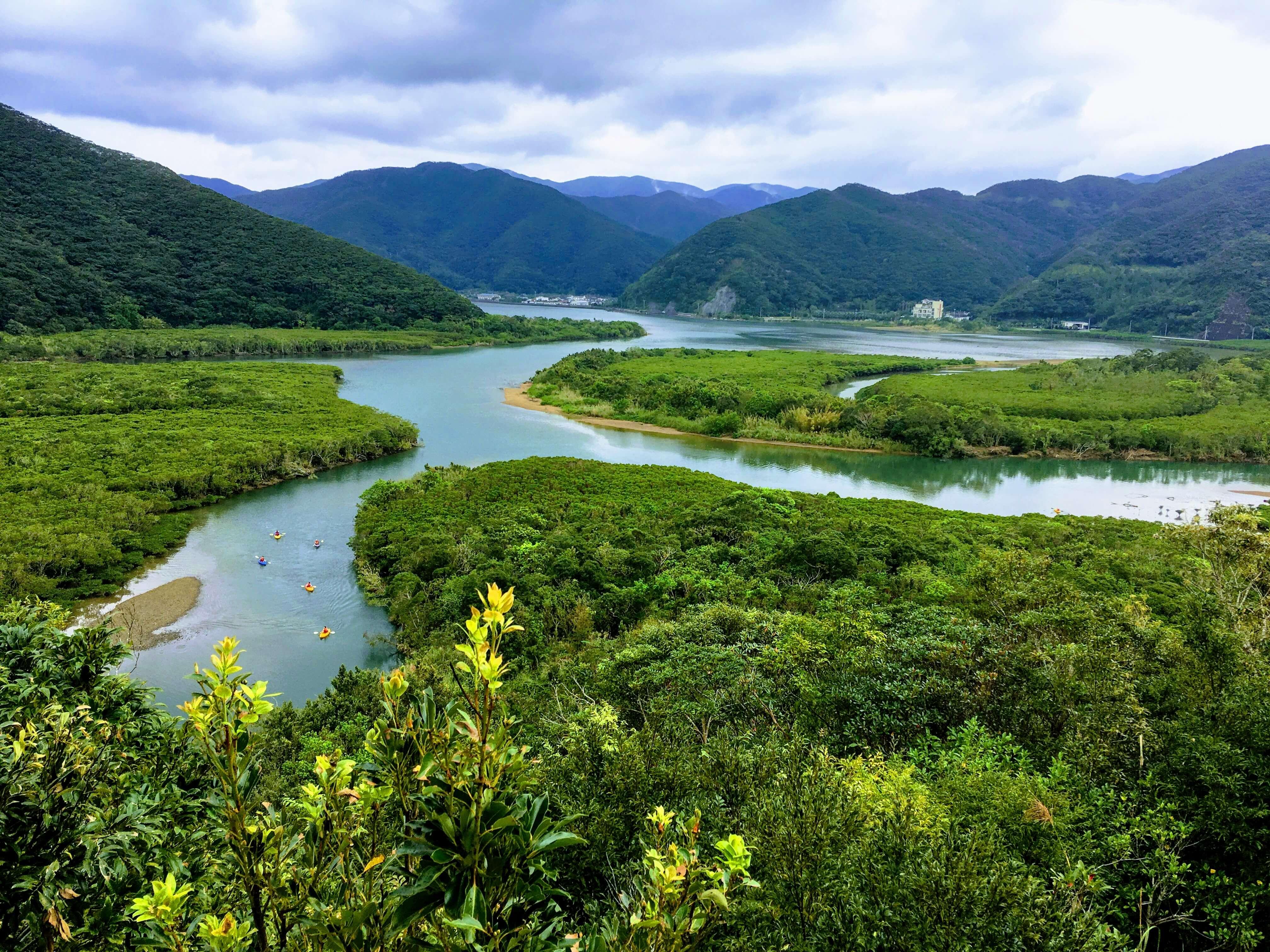 奄美のマングローブ原生林