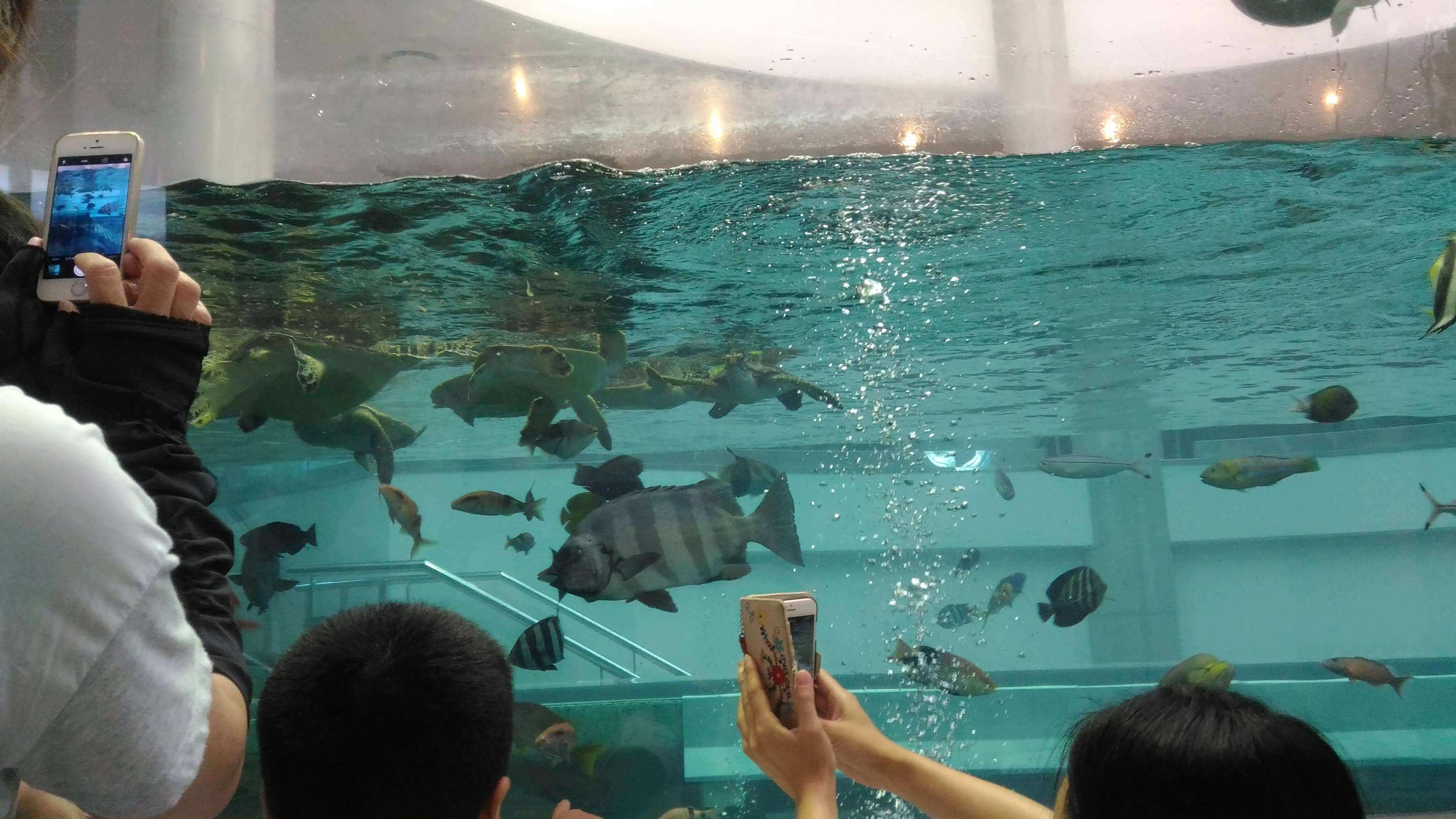 ウミガメや魚が泳ぐ水槽
