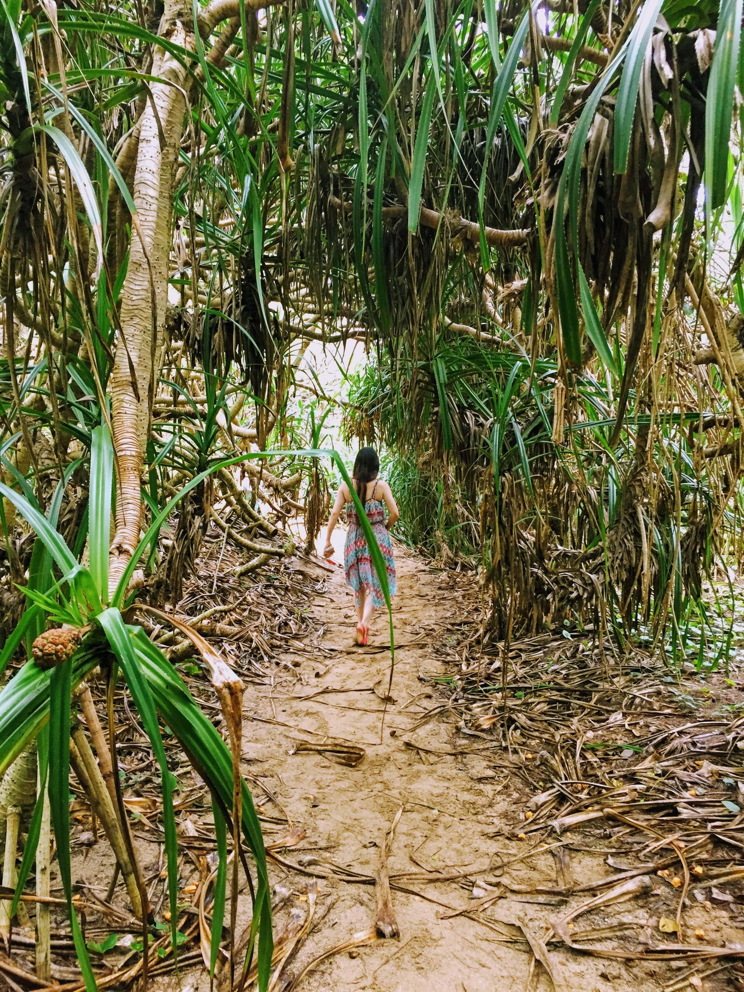 奄美のジャングルを抜ける人