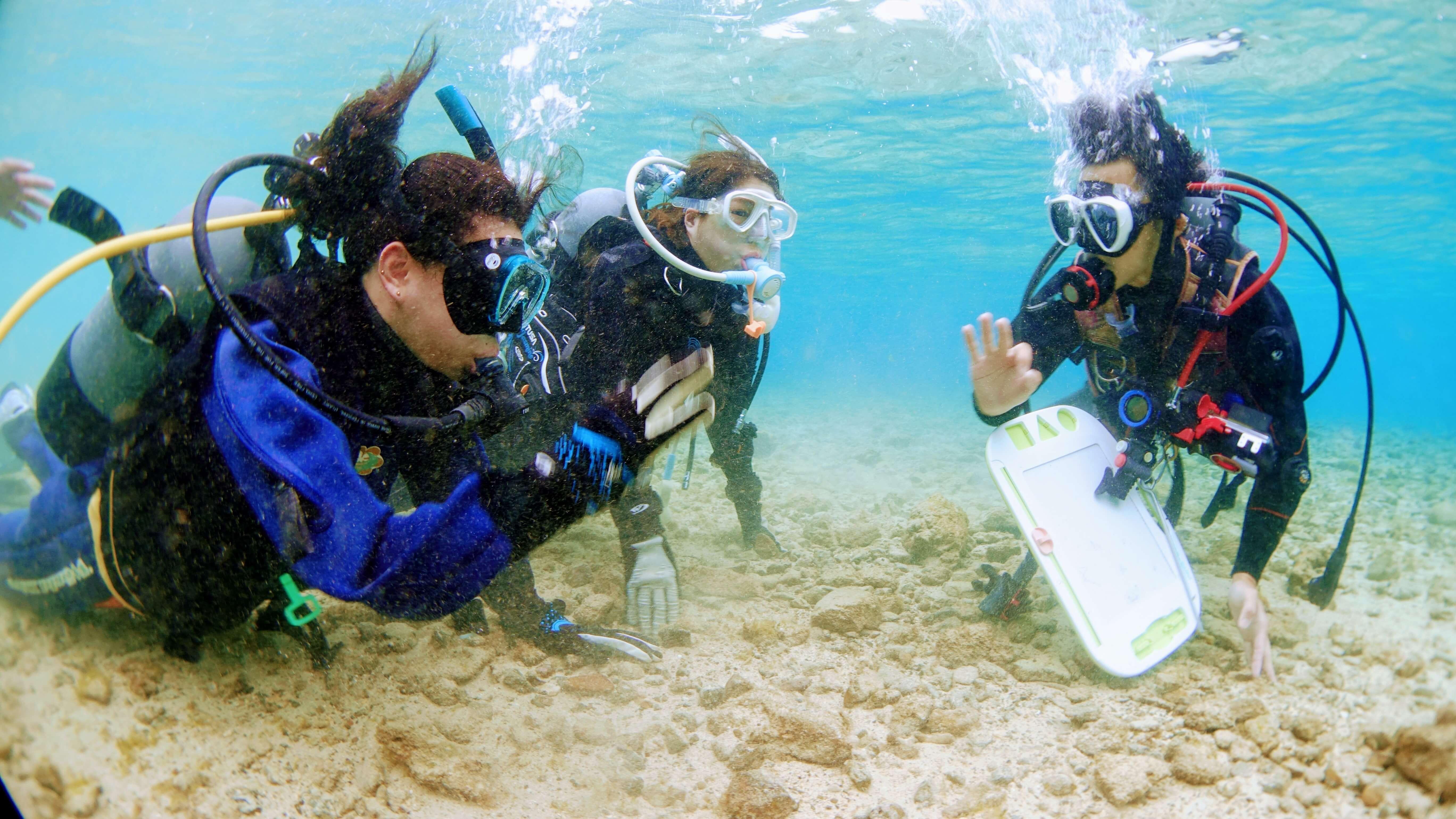 体験ダイビングではガイドさんに海を案内してもらえます
