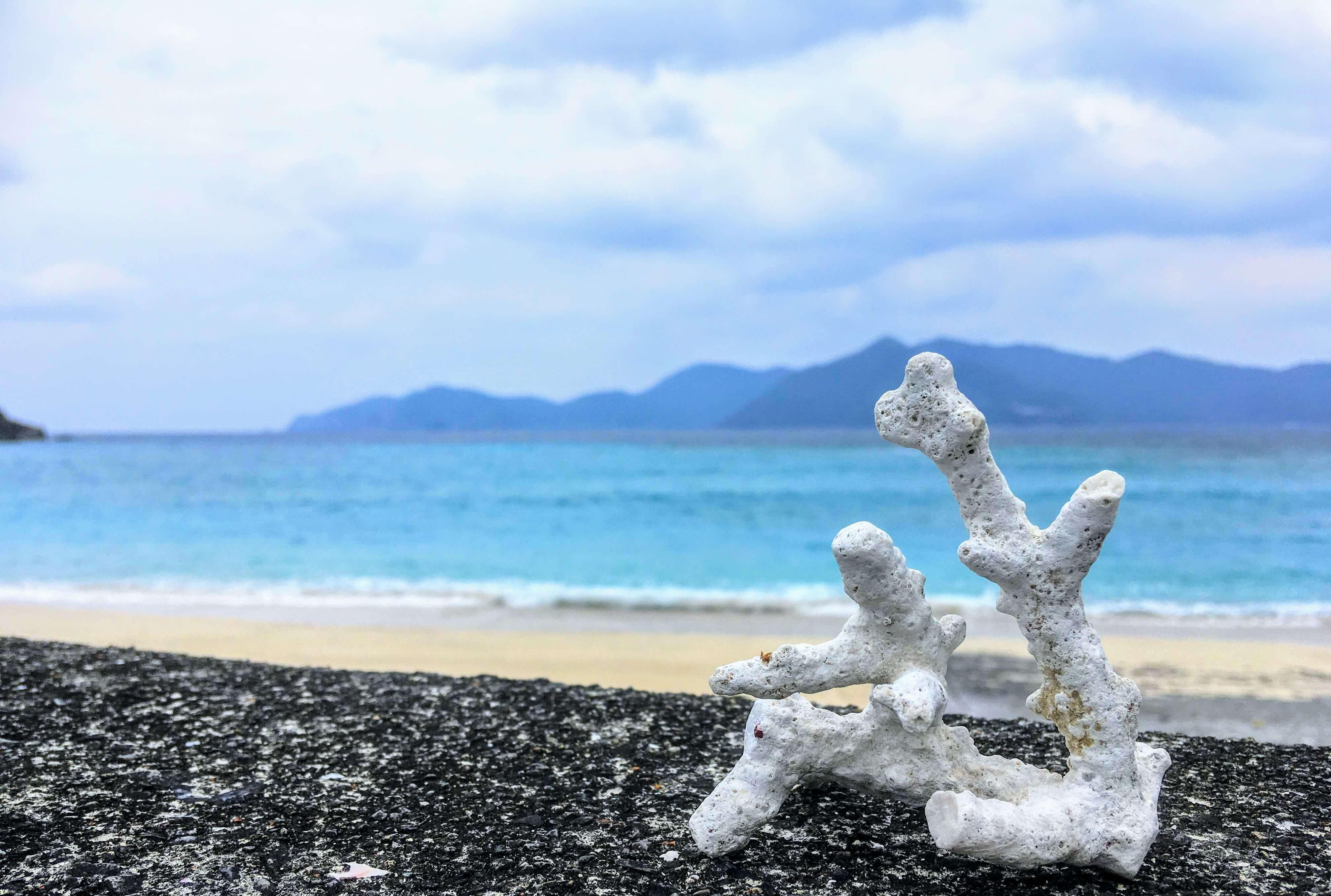 加計呂麻島の実久海岸