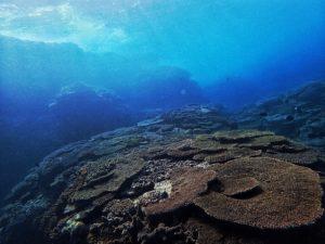 体験ダイビングで見れるサンゴ礁