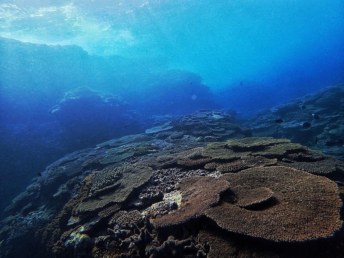奄美海峡のサンゴ