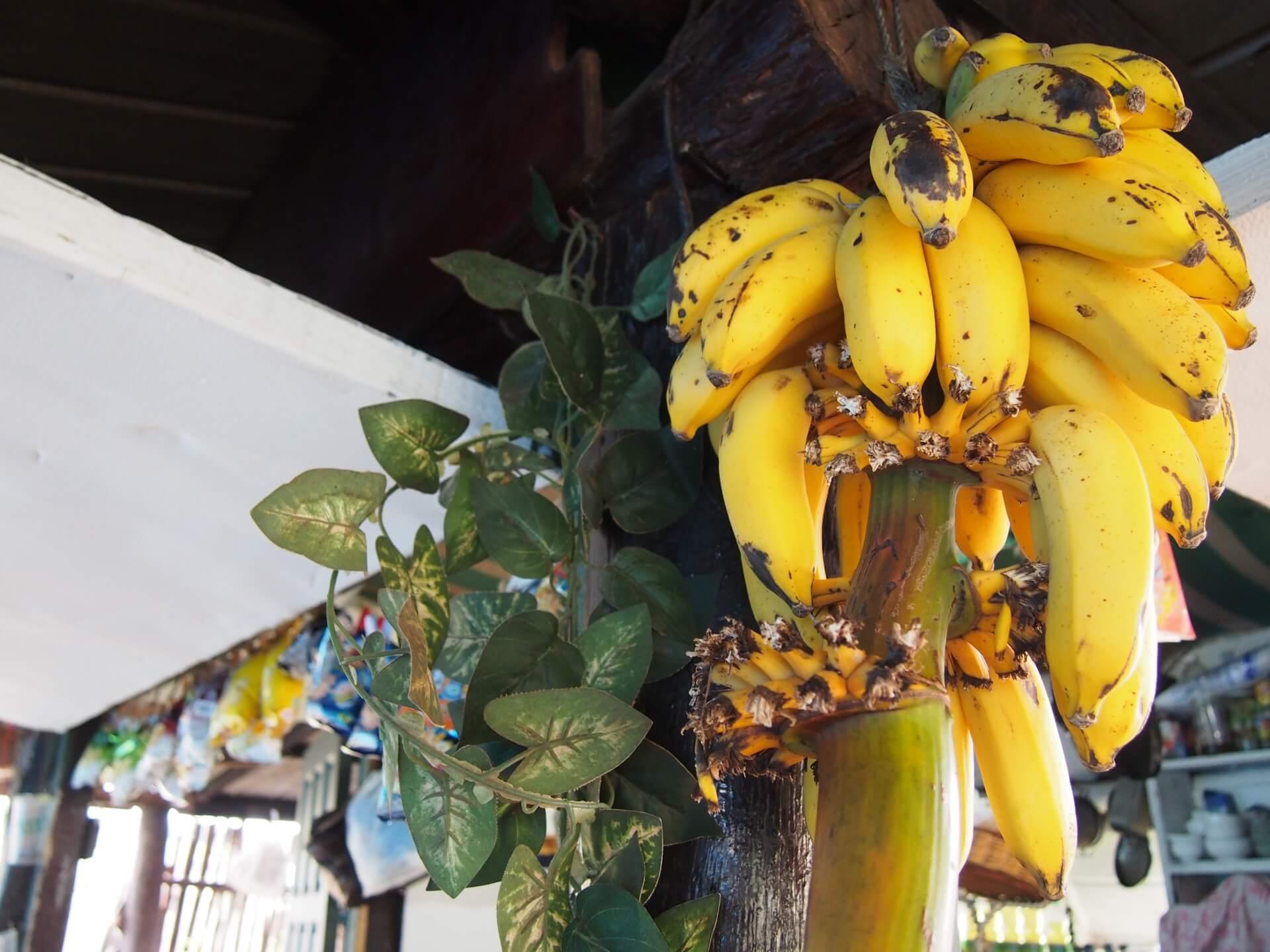 奄美の島バナナ