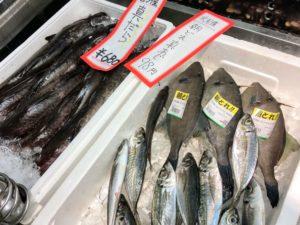 富山県高岡市に移住、こだわりグルメの鮮魚